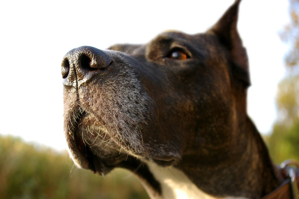 6 medical conditions that dogs can sniff out https://t.co/DJYBy7QWfP https://t.co/oqQHJo1XRq
