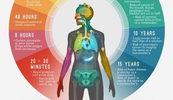 download what happens to your body when you quit smoking,