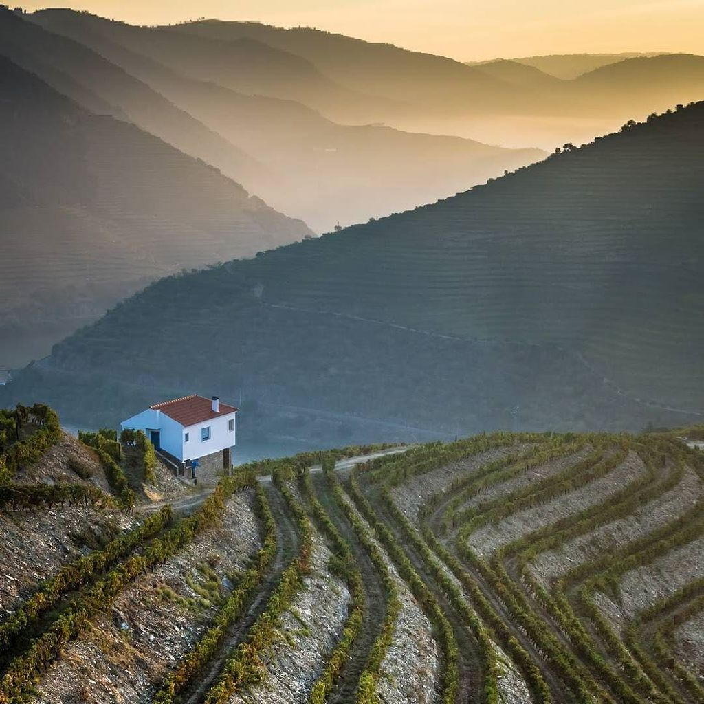 #Douro has #beautiful and #breathtaking landscapes with its undulating hills blanketed in grapevines, figs, pears a… https://t.co/5i6oXjvExF