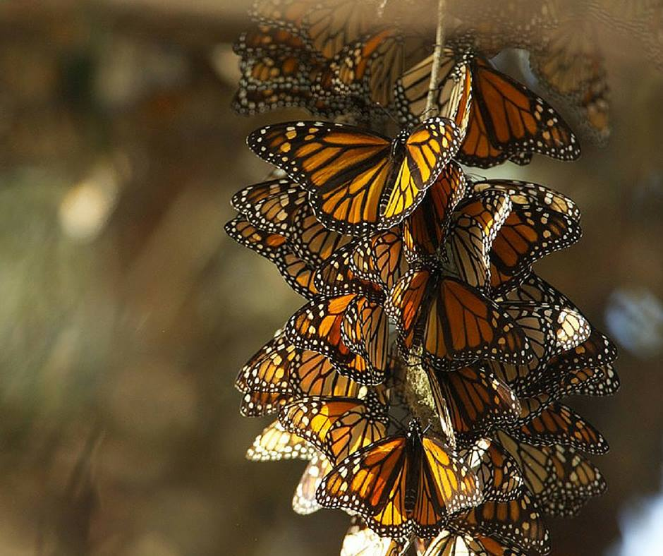 We're working to  #savethemonarch by pulling together around a specific campaign: https://t.co/BSnjZHreqv #xchannel https://t.co/pnswylP0dX