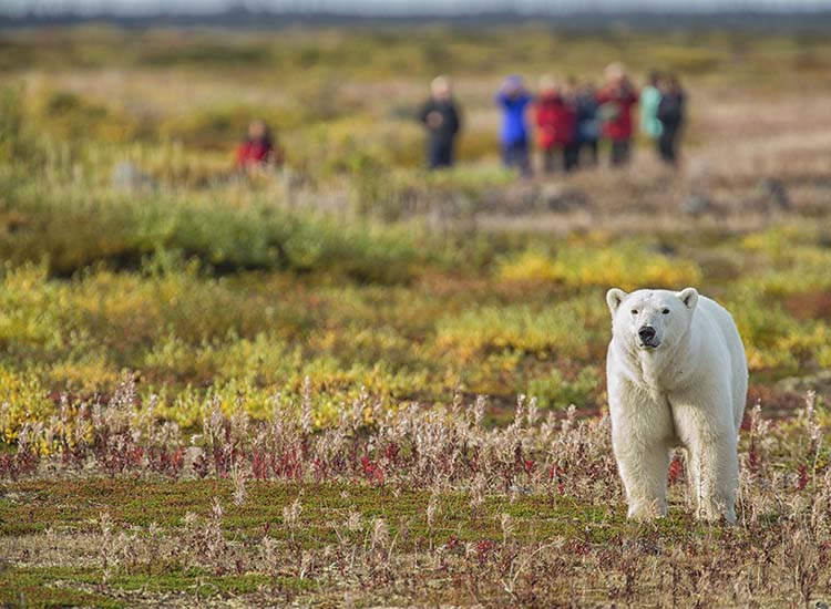 Here's an incredible way to see majestic polar bears up close: https://t.co/5f9hcdJLaD @churchillwild @ExploreCanada https://t.co/CK7QJKODfe