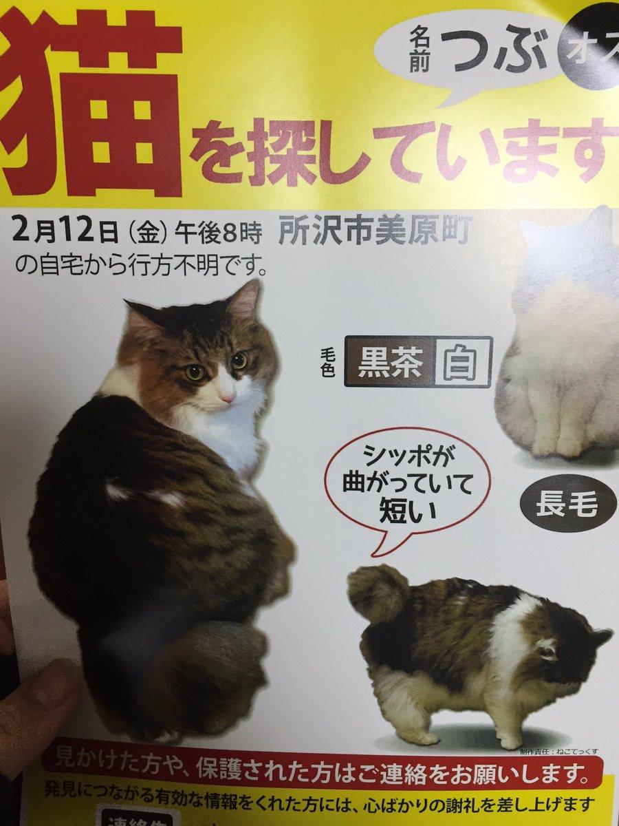 迷い猫だそうです。 特徴あるから、見つかるといいなぁ https://t.co/as6ucUz8fp
