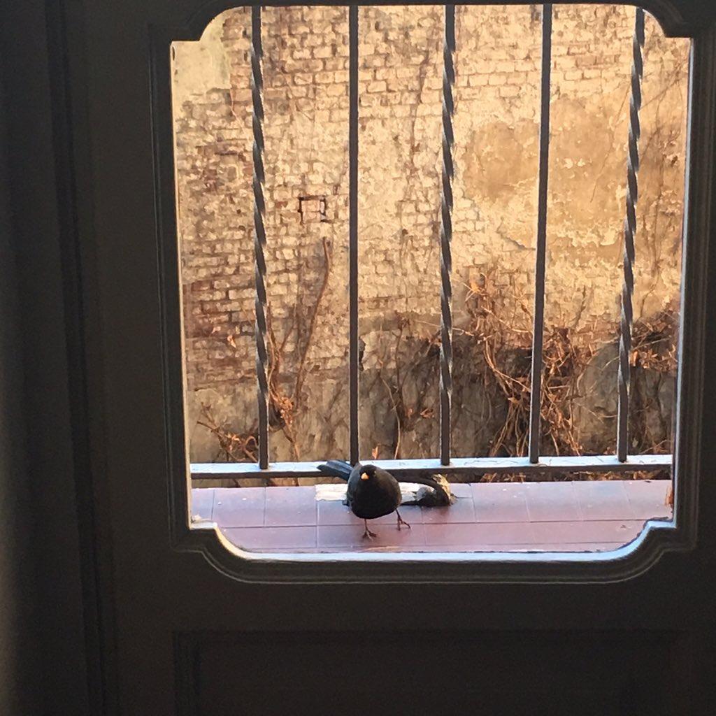 Graditi ospiti a colazione. @s_longinotti @strutturafine non ha visto le mele il mio #MerlonBrando 😂😁 https://t.co/9r3eumLcUX