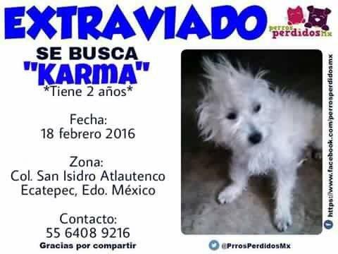 Ayúdalo a regresar a casa. Se perdió en Ecatepec. #perroperdido https://t.co/V76hYv4fMu