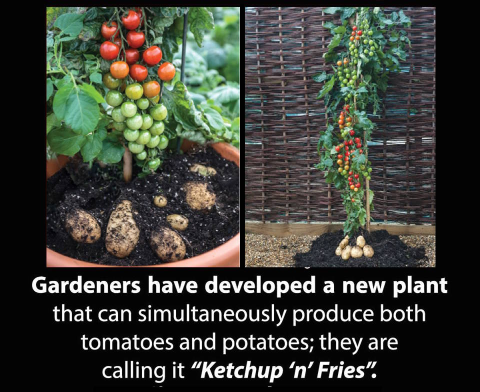 Have you ever heard about Ketchup n' Fries plant: https://t.co/wYTG6NDau4
