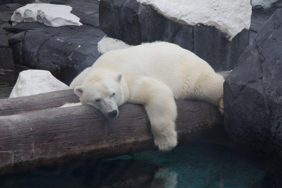 RT @peta: ALL animals at #SeaWorld suffer—not just orcas. https://t.co/1hsAZ6lf7t #SeaWorldSucks https://t.co/ZyvYDmTcCj