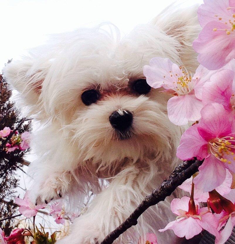 河津桜が満開だよ〜 https://t.co/QtkIF5raYB
