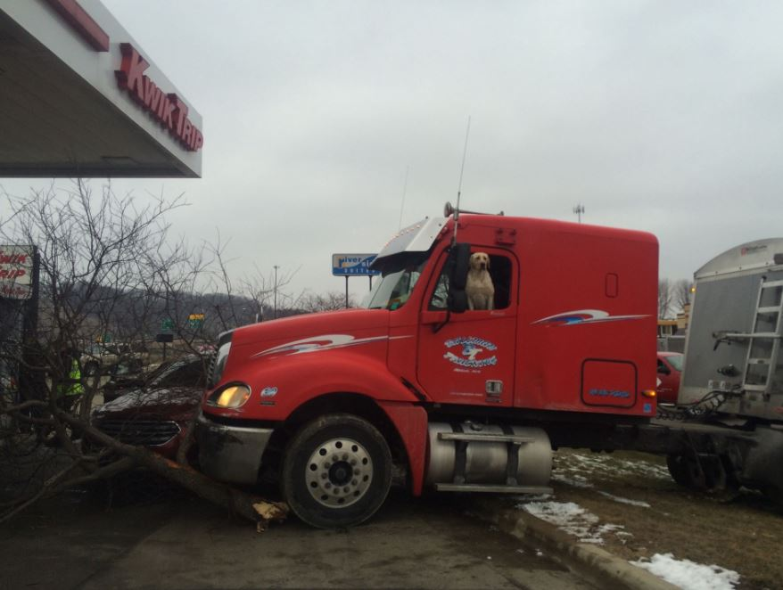 Dog drives semi into tree, parked car in Mankato, MN – car owner says dog showed remorse https://t.co/m2XXvWNiyE https://t.co/oGEBkOpjHj