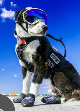 Meet Piper, the Airport Dog who Scares Away Birds from the Runway - https://t.co/ppaOXmmN4g via @PointMe2Plane https://t.co/H7RAPSPTGn