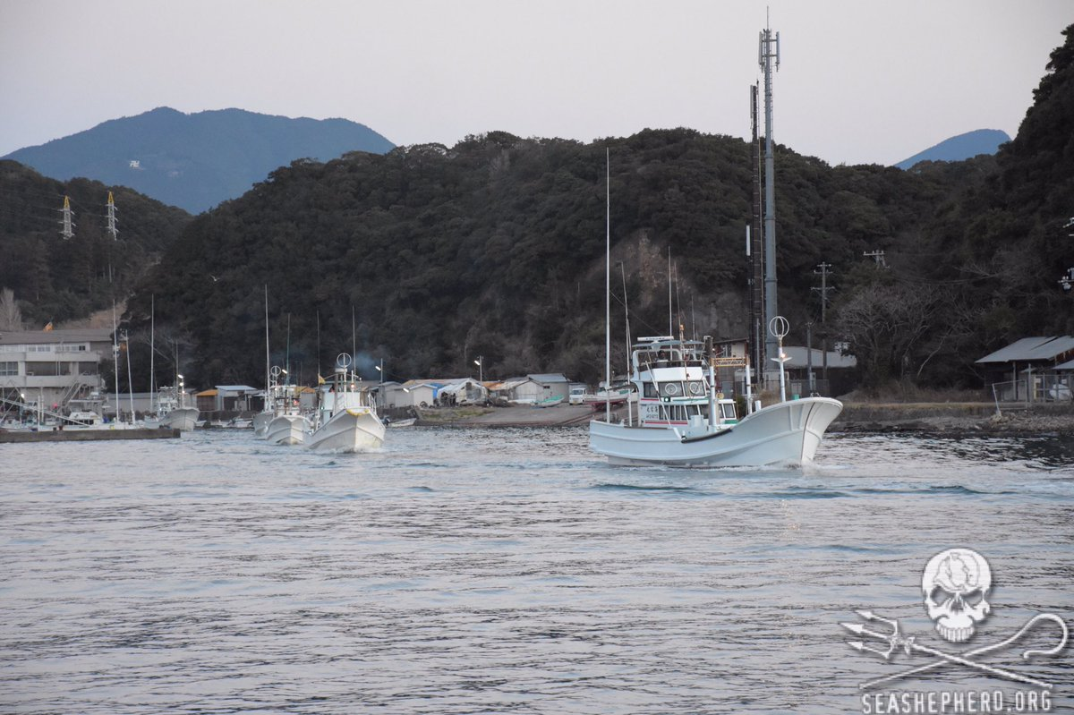 RT @CoveGuardians: 6:29am 10 hunting boats are leaving Taiji harbor to hunt Dolphins. THINK BLUE! #OpHenkaku #tweet4taiji https://t.co/COHa…