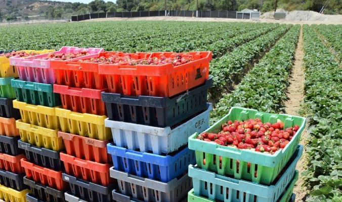 New study: Impacts of #pesticide combos are greater than the sum of their parts https://t.co/AmySwygas4 @CivilEats https://t.co/c7hdxNkcKy
