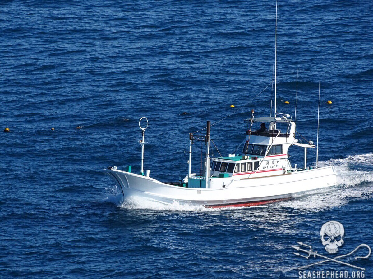 RT @CoveGuardians: 10:05am 14th consecutive BLUE COVE. All boats back. #tweet4taiji https://t.co/lmDTirRrvE