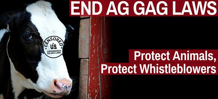 RT @LC4A: @pamfoundation Pls RT!!  -->> Stop New Missouri Ag Gag Legislation!! https://t.co/EEII7NJNCQ https://t.co/P2zFSQci0j