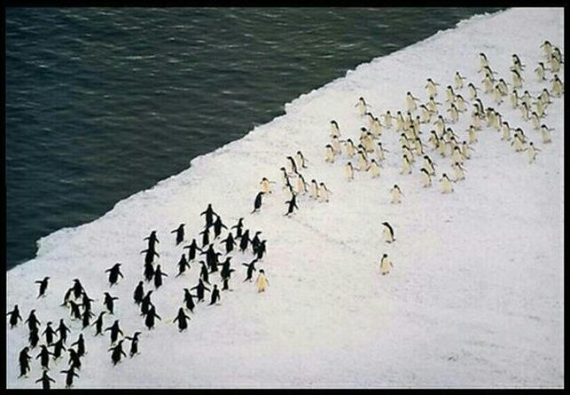 penguins reenact thermopylae... https://t.co/tosDcpU1JL