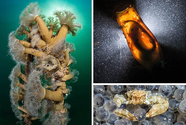 Devon diver's persistence pays off with underwater photography prize https://t.co/hwjCuQ2b4V @Seasaver @IUCN https://t.co/DKWwFgUuvC