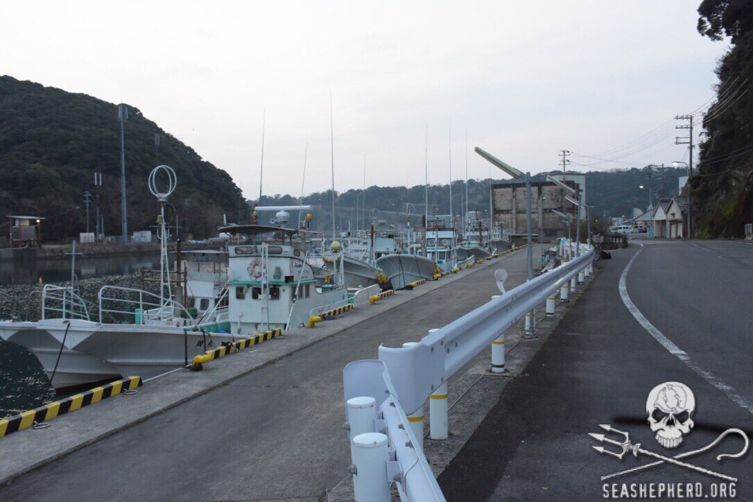 RT @CoveGuardians: 6:38am 16th consecutive BLUE COVE! Killers do not show up to harbor. #tweet4taiji #OpHenkaku https://t.co/Ea7kCLNUrI