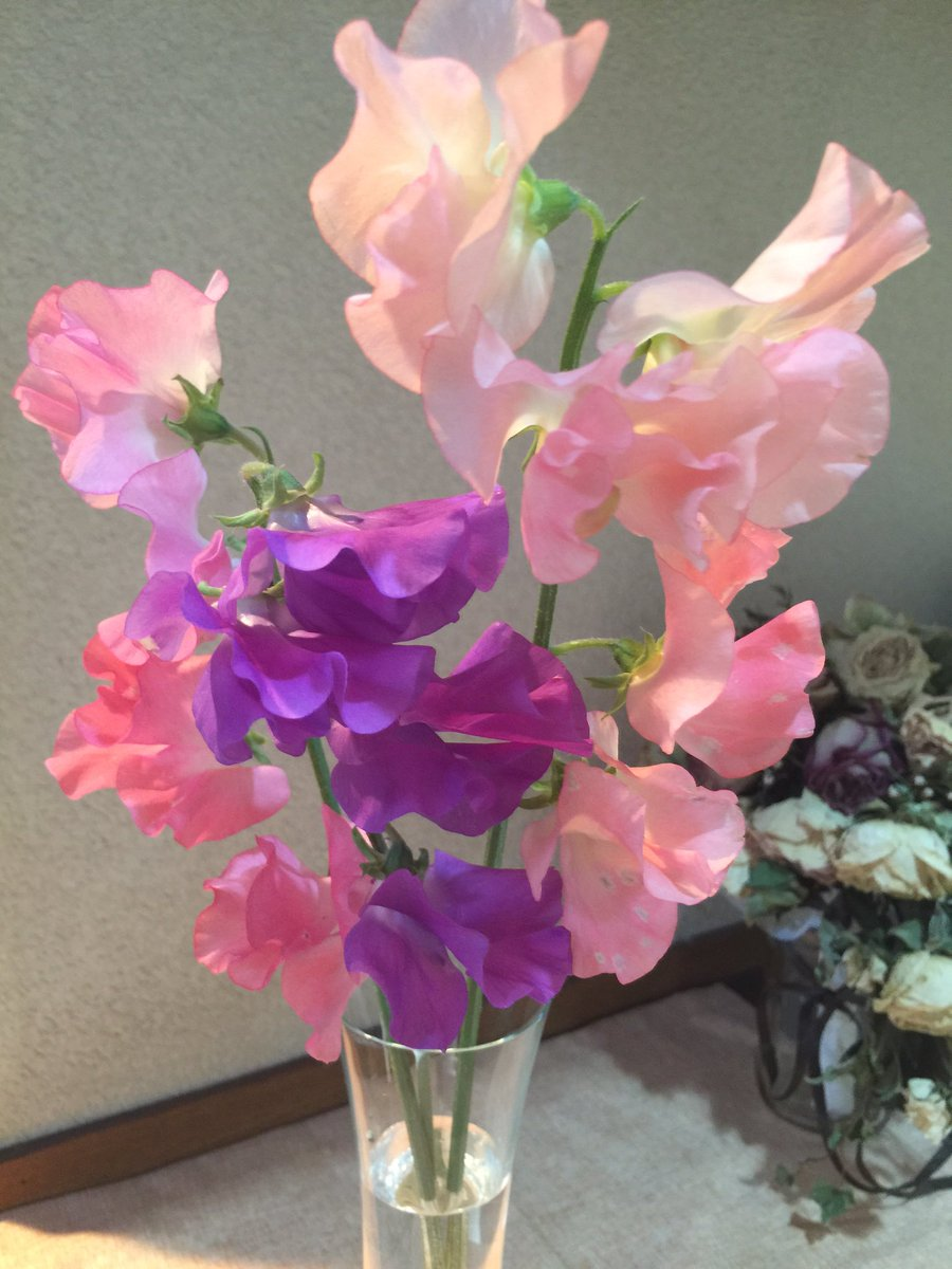 先日申し付けた #愛知県豊川市の花 が届きました。スイートピー。 すっごく良い香り。  このひらひら加減はぎりぎりまで着るの渋ってたカラードレスを思い出す。 私みたいなのがこんなふわふわひらひらピンク着ていいの?!的な意味で。 https://t.co/zcsbyKq7Ek