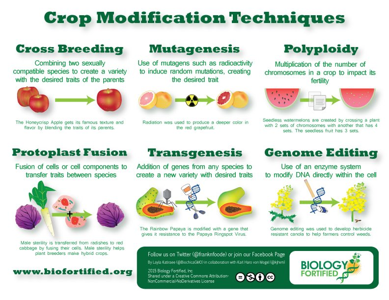 Love this infographic on ways plants are modified from @franknfoode @kjhvm @BioChicaGMO https://t.co/zSXyv5WOSh https://t.co/lSKCVxFYRV