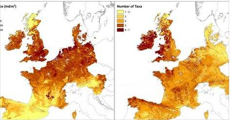 Fabulous: The first European earthworm map  https://t.co/r2vQ0QuKQI via @bootstrapES https://t.co/Nk1HcHA4xF