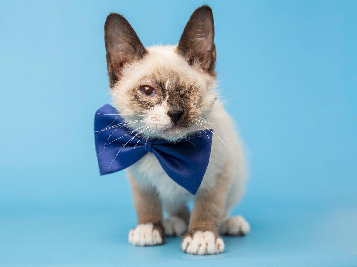 Meet Leonardo! https://t.co/fi3NocVgTh @azhumane #kitten #AdoptDontShop https://t.co/SSbNa2A2yh