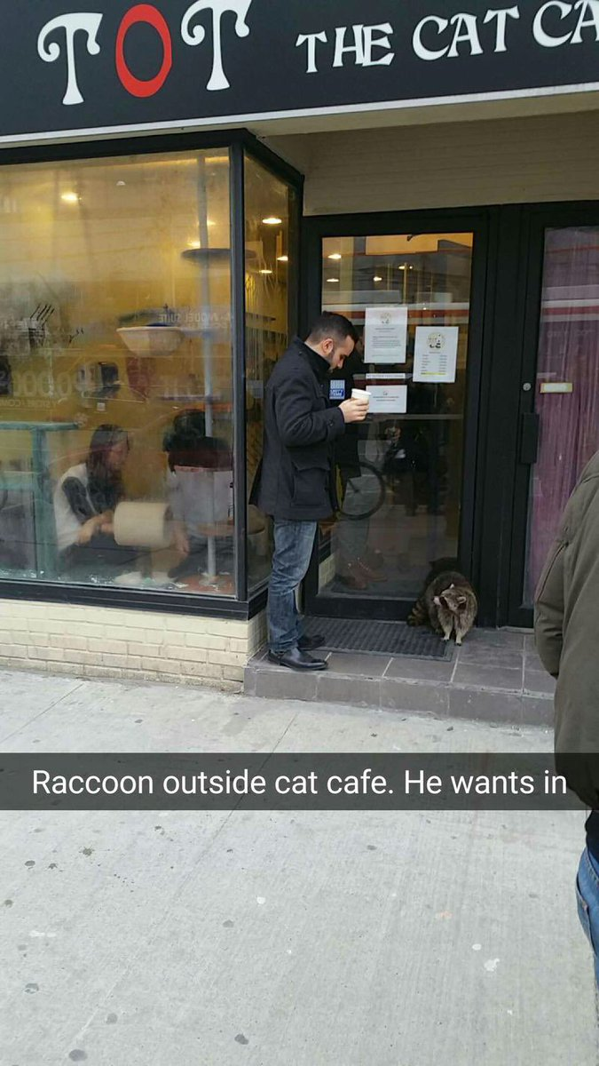 Spotted in Toronto: A raccoon trying to get in to a cat café https://t.co/ioE8BRQMt4 https://t.co/pE2N6yBI1B