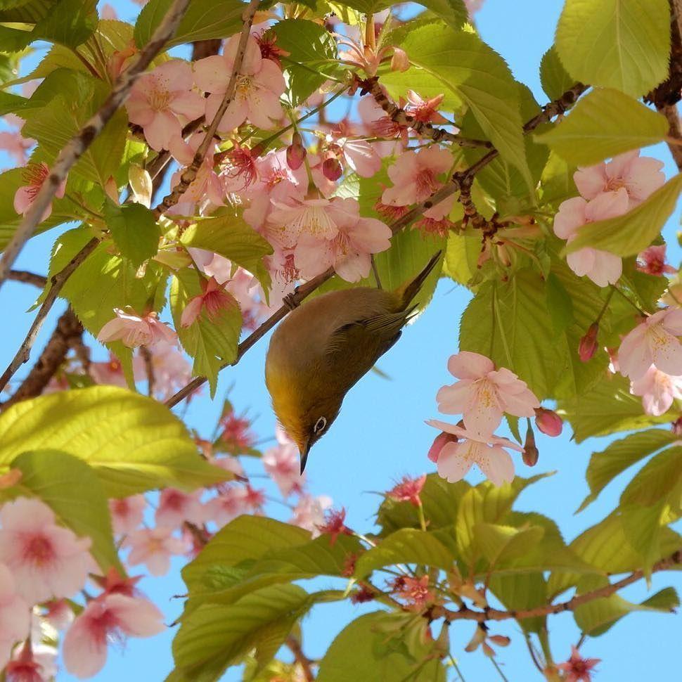 花の蜜を求めて動き回ってました…(・ω・´;) #team_naraku https://t.co/1cqhaqzMlr https://t.co/CK5PIlq85x