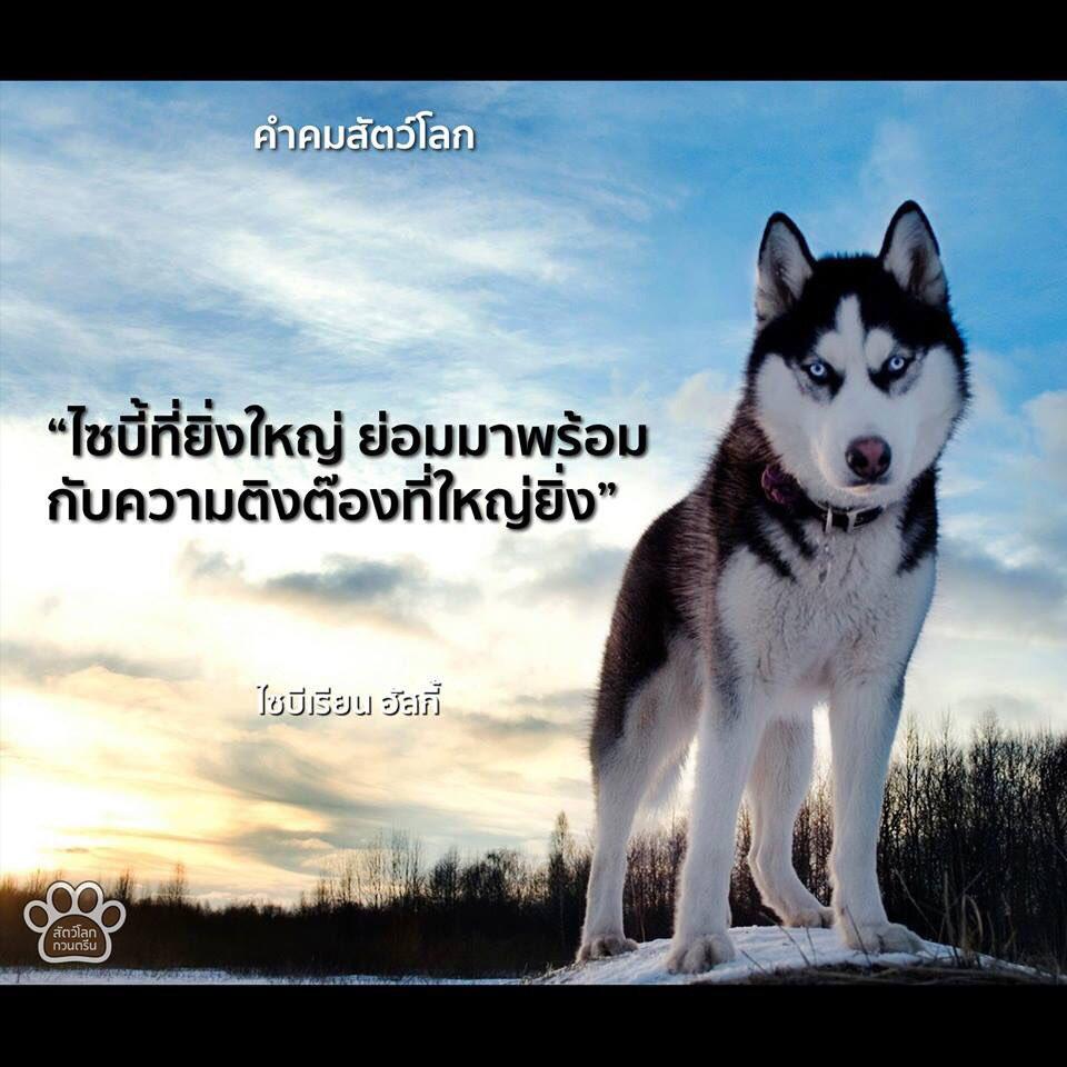 คำคมสัตว์โลก https://t.co/hzo6r5GLpj