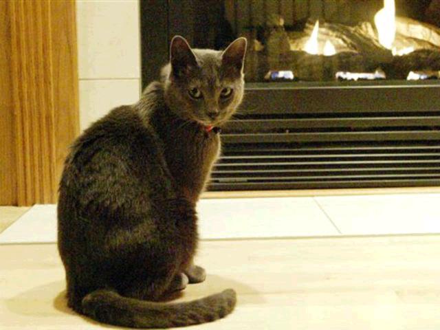 Catwalk: Wisconsin cat disappears, then reappears in Florida: https://t.co/PfQ7XmXAMl https://t.co/DRnXYKri6t