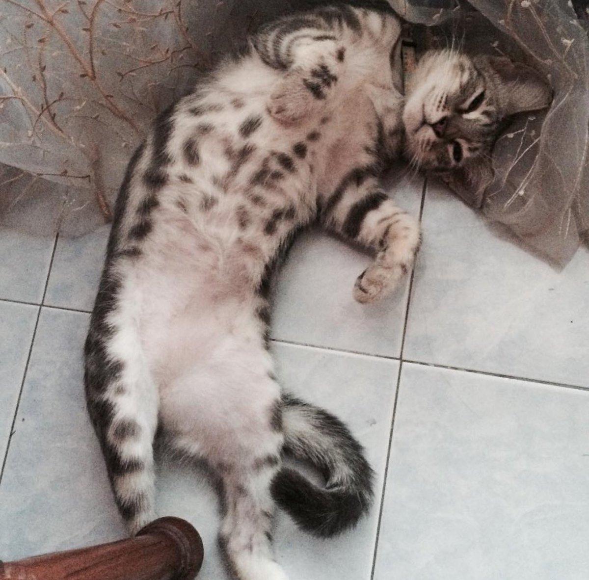 @tweet_batupahat Kucing hilang