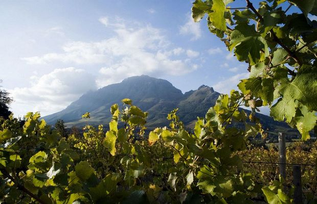 RT @FlysaaIndia: March - Month of harvest celebration and some of the best wine estate festivals