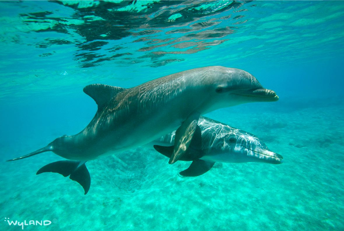 Its #DolphinAwarenessMonth  Celebrate #Dolphins by taking the time this month to learn something new about them https://t.co/unSd5nIJWP