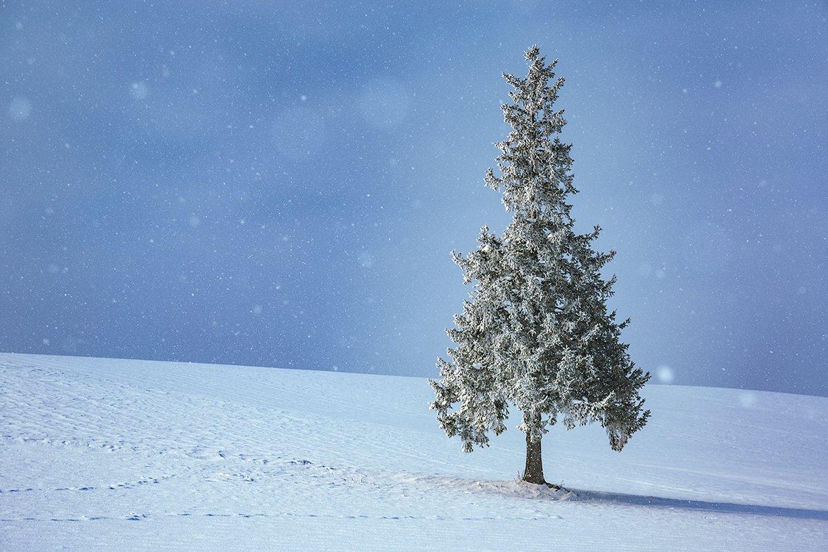 季節外れのクリスマスツリーの木  #ファインダー越しの私の世界  #写真好きな人と繋がりたい  #クリスマスツリーの木 #雪 #北海道 https://t.co/TS4mbanJvj