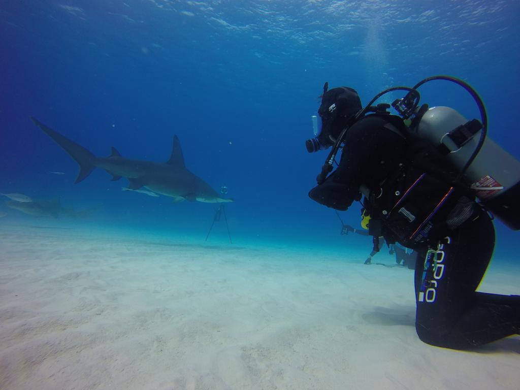 Honored to be working w/@jebcorliss & @AbernethyScuba in videoing sharks' true nature. Underwater webcast tomorrow! https://t.co/x1PuEWJIVB
