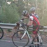 Cyclists stop to give thirsty koala a drink on Australian road https://t.co/uzzIMvdImq https://t.co/PRNZaHJGiq