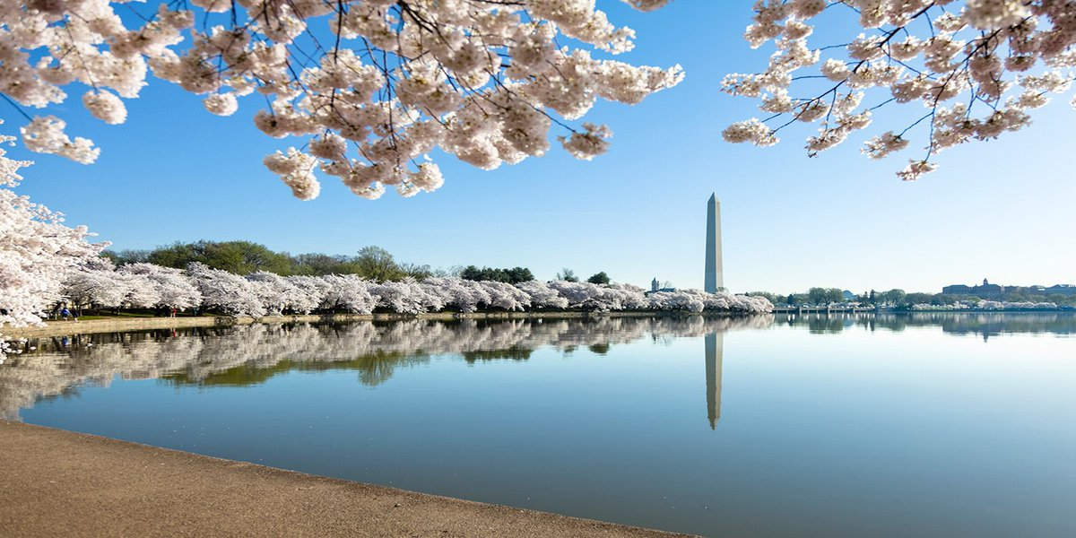 CherryBlossom season will be here soon. Flights to DC starting at $123