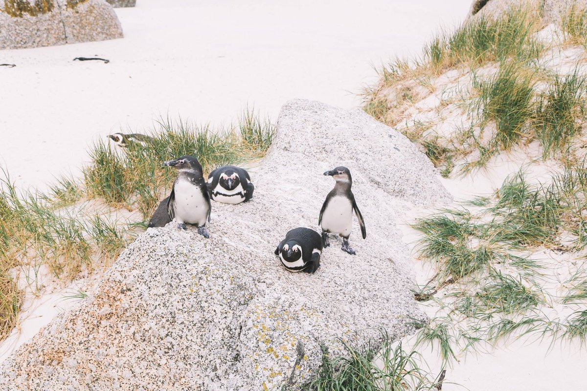 RT @SAA_UK: A beach... with penguins?! South Africa really does have it