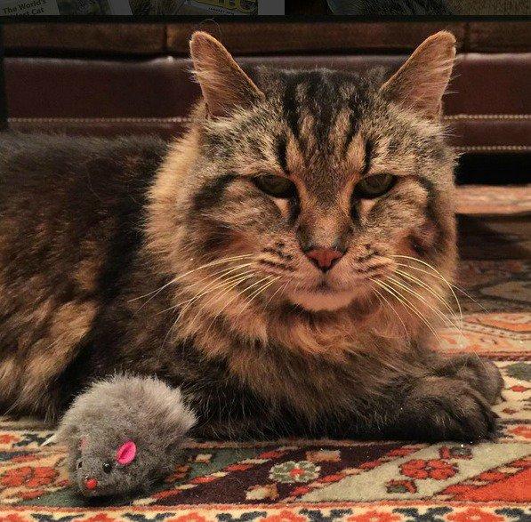 Meet Corduroy, the World's Oldest Living Cat https://t.co/sf4xEs7bn8 https://t.co/5fTeEtDZ31
