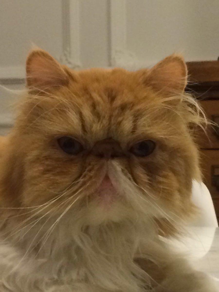 Se acaba de escapar mi gato..zona belgrano R...si alguien lo ve 1000 gracias por avisar RT https://t.co/sHNybhGty6