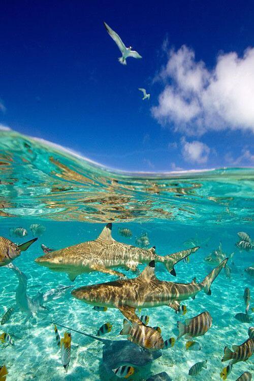 Bora Bora lagoon in #Tahiti, French Polynesia   Photography by ©Chris Mclennan https://t.co/59tAvvGeHo