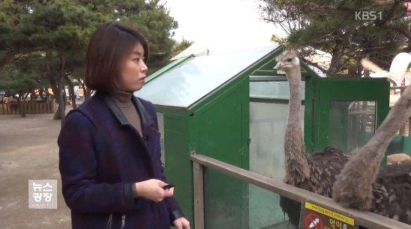 동물을 만지고 먹이도 주는 체험형 동물원이 인기인데요. 이곳에서 어린이들이 동물의 공격을 받아 다치는 일이 발생하고 있습니다. 기자는 타조에게 수첩을 뺏겼습니다. https://t.co/2iEhHkX77w https://t.co/rZYkfuXpcs
