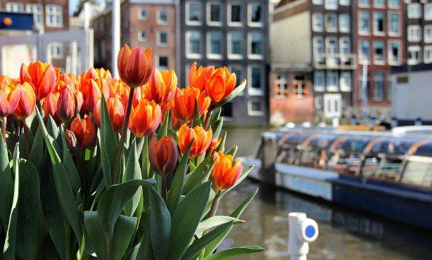 [April 1-30] The #TulpFestival will plant 800.000 tulips all over #Amsterdam https://t.co/YKQhvoaEr5 https://t.co/gOxdpXHk5E