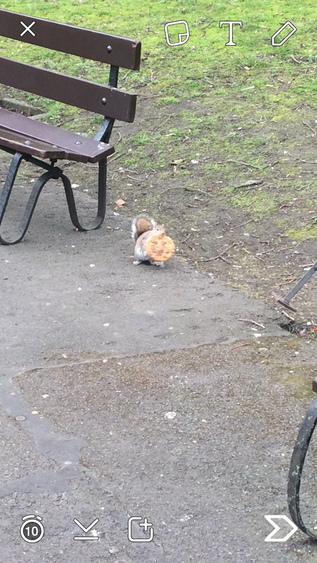 Just saw a squirrel, eating a cookie, in st Stephens green.. Looking forward to my show tonight.. https://t.co/2zyuCgkGCq