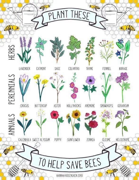 Plant these! Help save #bees! #pollinators https://t.co/RQv8xYxsNZ
