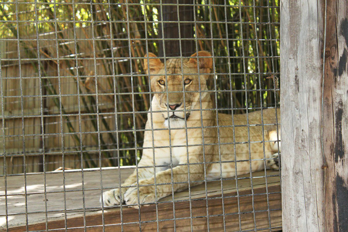 RT @peta: No animal deserves to be behind bars. #BoycottTheZoo https://t.co/xRHKpAiAm3