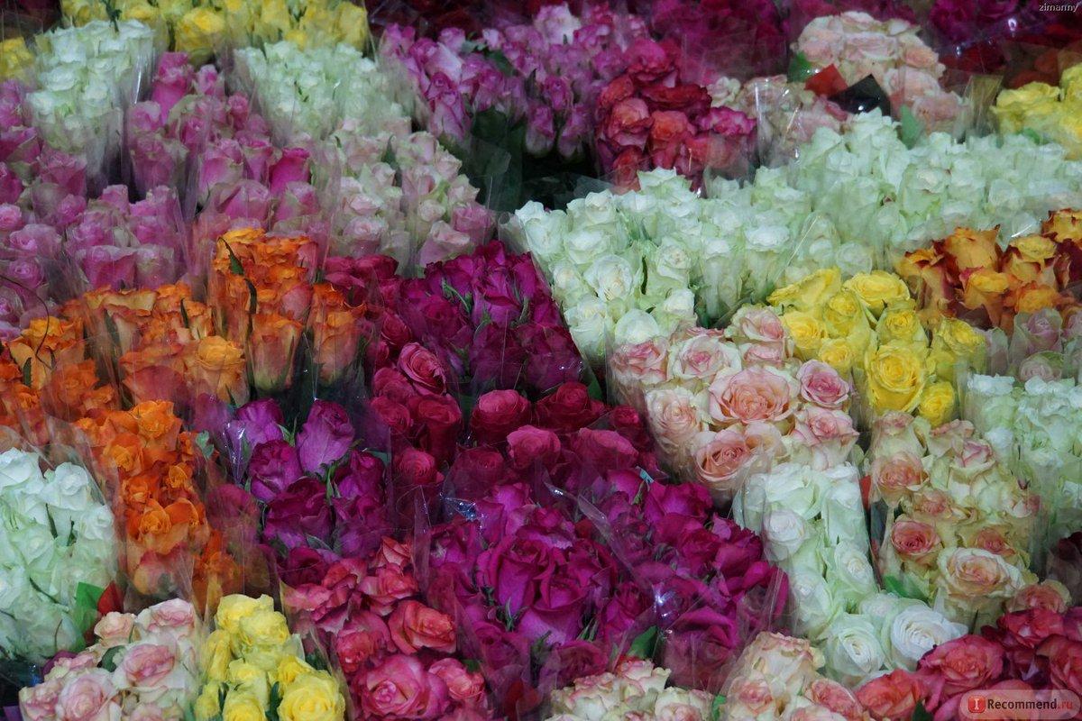 Каталог цветов мира фото