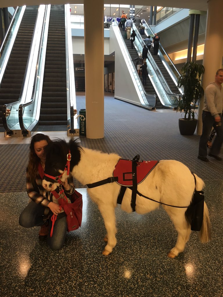 We're horsin' around at CVG today! Meet Dakota, our first therapy horse. https://t.co/BUnYueK7K1