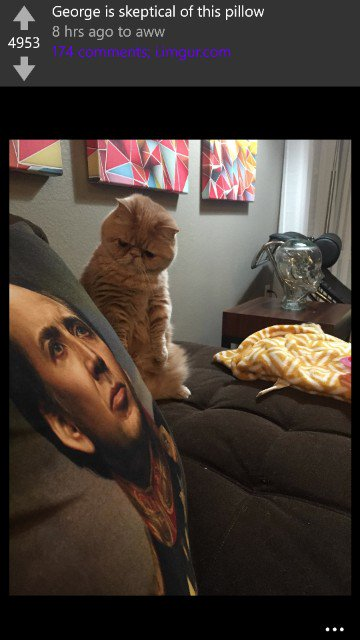 This cat is how I feel about Nicholas cage too. https://t.co/SocT67GnOK