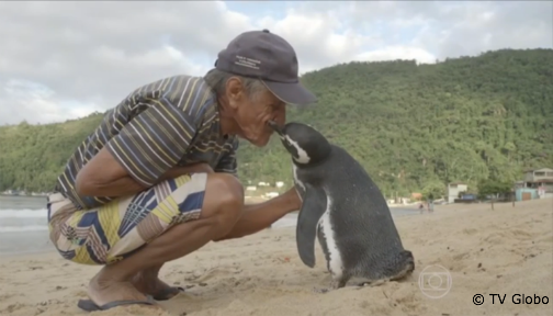Penguin swims 5,000 miles every year for reunion with the man who saved his life. https://t.co/2C2F04DAy6 @MetroUK https://t.co/mdRbMt1FvY