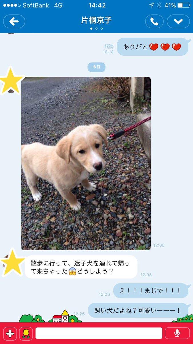 【迷い犬の飼主さんを探してます】 実家の両親が、迷い犬を保護しました