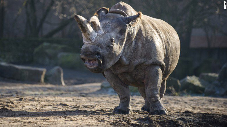 RT @cnni: Number of rhinos slaughtered in Africa last year  is the largest in nearly a decade: https://t.co/y8XDWalmbS https://t.co/6Vejm6Z…